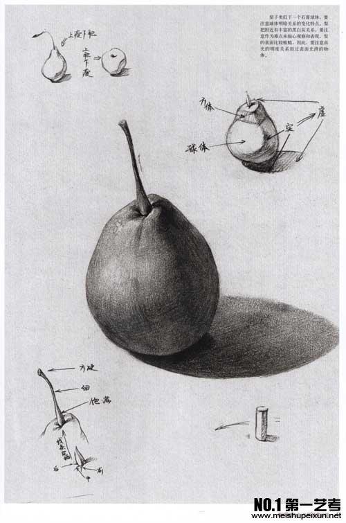水果素描在素描静物中经常出现